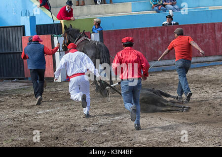 June 18, 2017 Pujili, Ecuador: the sacrificed bull is pulled out from the ring by horse after the ritual - Stock Photo