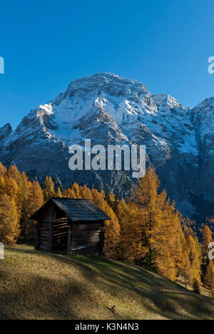 Alta Badia, Dolomites, South Tyrol, Italy. Autumn at the pastures of Ciavaza. In the background the Sasso delle - Stock Photo
