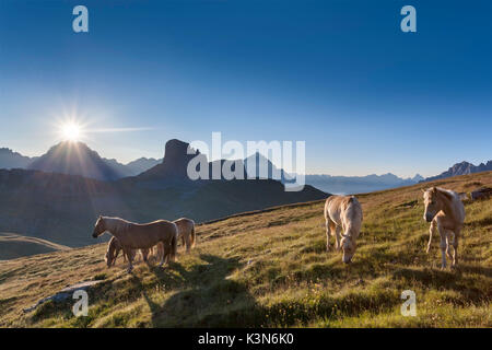 Haflinger horses grazing on the green plain of Mondeval. In the background the Becco di Mezzodì, behind Sorapiss - Stock Photo