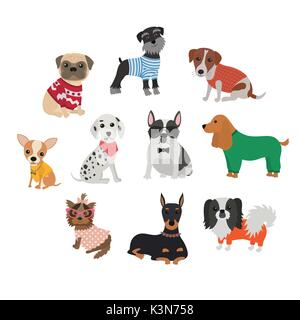 Set of different breeds of dogs in clothing and accessories - Stock Photo