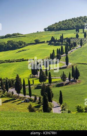 Road with cypresses. Orcia Valley, Siena district, Tuscany, Italy. - Stock Photo