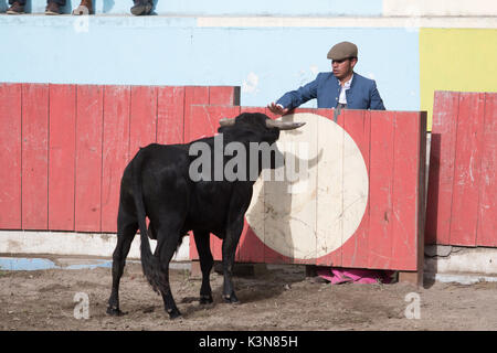 June 18, 2017 Pujili, Ecuador: picador behind protecting fence holds palm out towards the bull - Stock Photo
