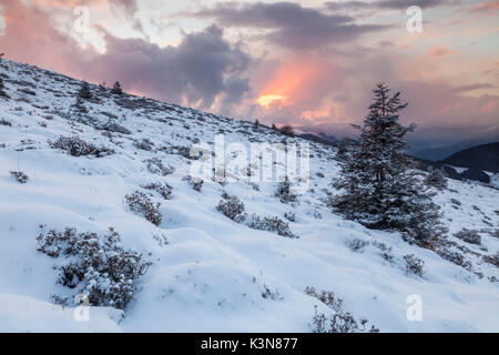 Colle of San Zeno, Trompia valley, Lake Iseo, Brescia province, Lombardy, Italy, Europe. A solitary fir with snow - Stock Photo