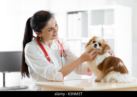 smiling Veterinarian with dog, on table in vet clinic - Stock Photo