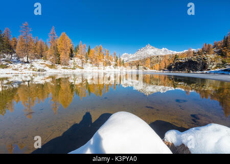 Red larches frame the frozen Lake Mufule Malenco Valley province of Sondrio Valtellina Italy Europe - Stock Photo