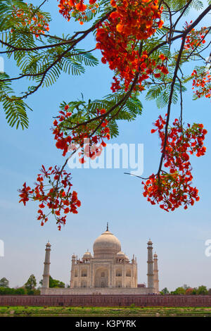 Taj Mahal represents the finest architectural and artistic achievement through perfect harmony and excellent craftsmanship - Stock Photo