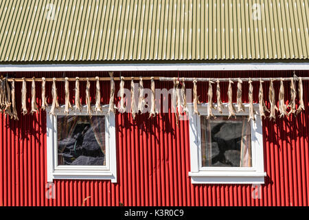 Dried cod in typical houses of fishermen called Rorbu Hamnøy Moskenes county of Nordland Lofoten Islands Norway - Stock Photo