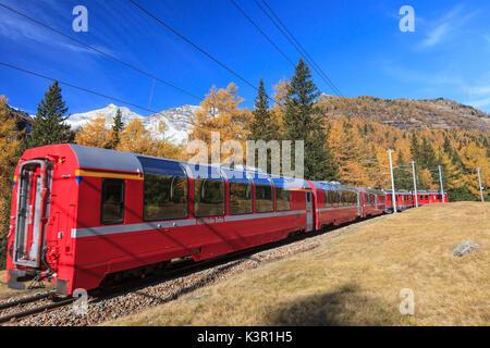 The red train of Bernina in autumn going towards Alp Grum, Val Poschiavo Switzerland Europe - Stock Photo
