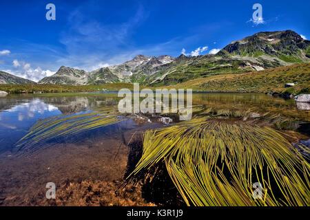 Algae floating on the water at Lake Andossi above the village of Madesimo. Valchiavenna. Vallespluga. Lombardy. - Stock Photo