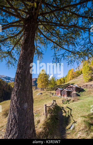 Huts on the pastures of Zermatt surrounded by yellowed larches and the Matterhorn. Switzerland. Europe - Stock Photo