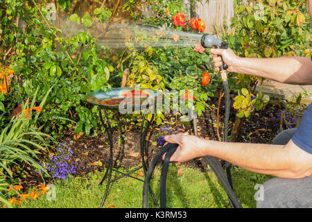 An older man watering his garden plants, early autumn, with a hose and spray attachment. Langtoft, Lincolnshire, - Stock Photo