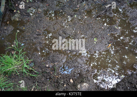 Muddy puddles with green grass with reflection - Stock Photo