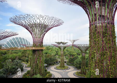 Take A Scenic Stroll, 22 Metres Above Ground, In The Very Heart Of Nature.
