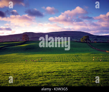 An early morning view of farmland near Hawes, Wensleydale, Yorkshire, UK - Stock Photo