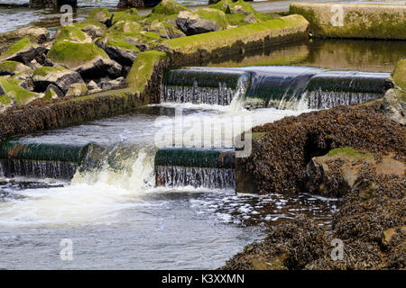 Lower part of the fish ladder at Lopwell dam on the River Tavy, Devon, UK - Stock Photo