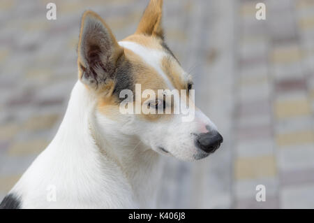 Outdoor portrait of nice stray cross-breed white dog - Stock Photo