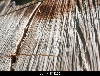 close up rivet wood grain texture cracks grooves; Essex; England; UK - Stock Photo