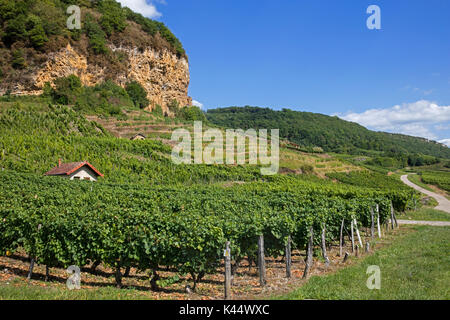 Vineyards famous for their white wine, Château-Chalon AOC in the Jura department in Franche-Comté, Lons-le-Saunier, France