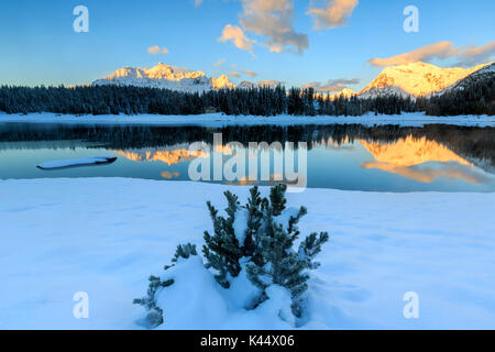 Woods and snowy peaks are reflected in Lake Palù at dawn Malenco Valley Valtellina Lombardy Italy Europe - Stock Photo