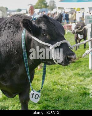 The Bucks Country Show - Stock Photo
