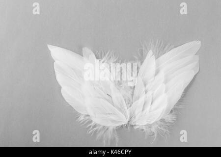 angel wings on grey background - Stock Photo