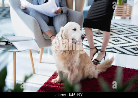 cropped shot of businesswoman in formal wear with dog lying on carpet at office - Stock Photo