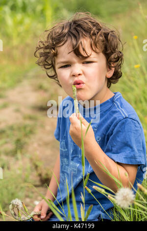 Four year old boy eating a freshly picked Rattlesnake heirloom beans in a garden in Maple Valley, Washington, USA. - Stock Photo