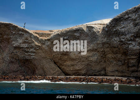 Sea lions, Ballestas Islands, Pisco Province, Ica Region, Peru, South America - Stock Photo