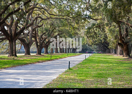 A stunning, country lane lined with ancient live oak trees draped in spanish moss. Near Charleton South Carolina, - Stock Photo