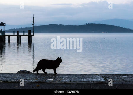 A cat silhouette on a pier on a lake at dusk - Stock Photo