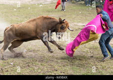 May 28, 2017 Sangolqui, Ecuador: man holding up a cape charged by a bull at a rural amateur bullfight in the Andes - Stock Photo