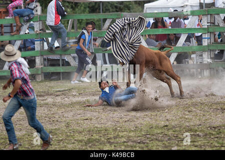 May 28, 2017 Sangolqui, Ecuador: young man ran over by a bull at a rural amateur rodeo in the Andes - Stock Photo