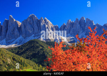 Colorful autumn trees frame the group of Odle. St. Magdalena Funes Valley South Tyrol Dolomites Italy Europe - Stock Photo