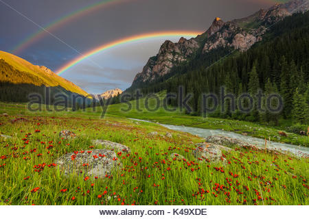 Summer landscape in mountains with Flowers, a rainbow - Stock Photo