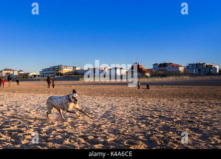 Dog At The Beach - Stock Photo
