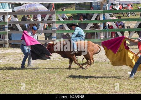 May 28, 2017 Sangolqui, Ecuador: young cowboy riding bull bareback at a rural amateur rodeo in the Andes - Stock Photo