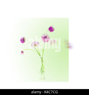 Contemporary photograph of abstract flowers - Stock Photo