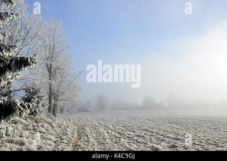 Waldrand Im Winter Im Dunst - Stock Photo