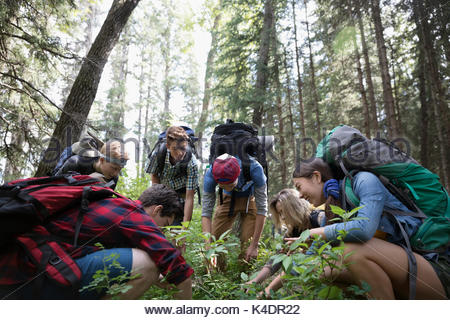Teenage outdoor school students exploring undergrowth in woods - Stock Photo