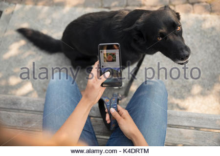 Personal perspective woman with dog using smart phone on bench - Stock Photo