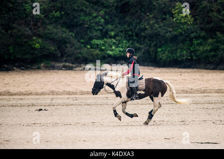Gannel Estuary - a horserider riding along the exposed river bed at low tide on the Gannel River in Newquay, Cornwall. - Stock Photo