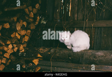old white cat sitting on logs in the woodshed, tinted photo - Stock Photo