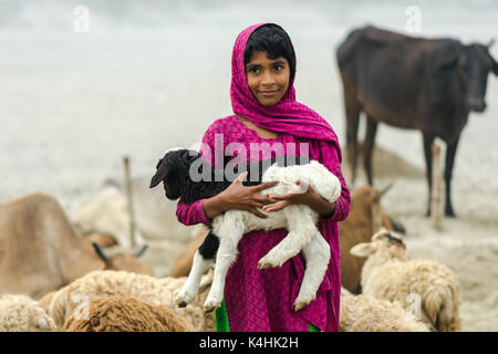 The sheep (Ovis aries) is a quadrupedal, ruminant mammal typically kept as livestock. - Stock Photo