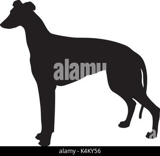 silhouette of a dog. black and white greyhound - Stock Photo