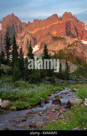 Sunrise view of Three Fingered Jack mountain from a wildflower meadow in bloom - Stock Photo