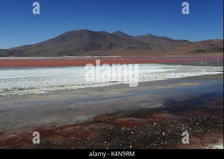 Laguna Colorada (red lagoon), Reserva de Fauna Andina Eduardo Avaroa, Southern Bolivia