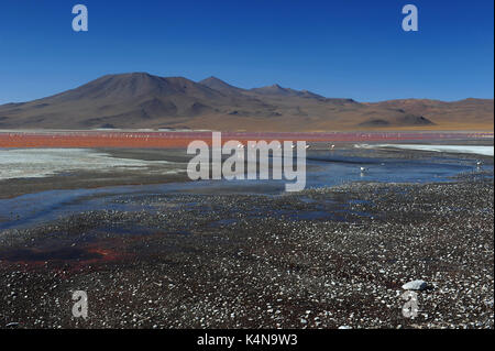 Laguna Colorada (red lagoon), Reserva de Fauna Andina Eduardo Avaroa, Southern Bolivia - Stock Photo