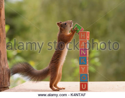 red squirrel with a block in hands and the words thank you - Stock Photo