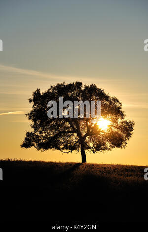 Cork trees in the vast plains of Alentejo. Portugal - Stock Photo