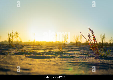 bushes and trees in the desert the sun shines. the sun sets over the horizon in the desert - Stock Photo